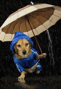 Don't forget rain gear!